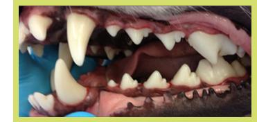 Animal Dental Care | Animal Dental Care