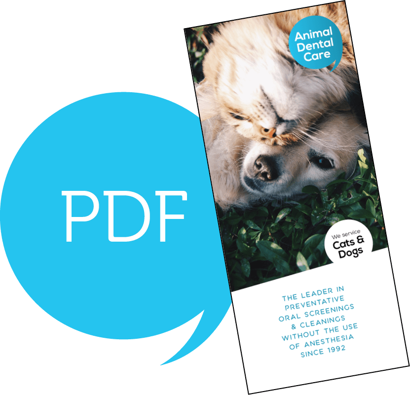 Borchure PDF Download